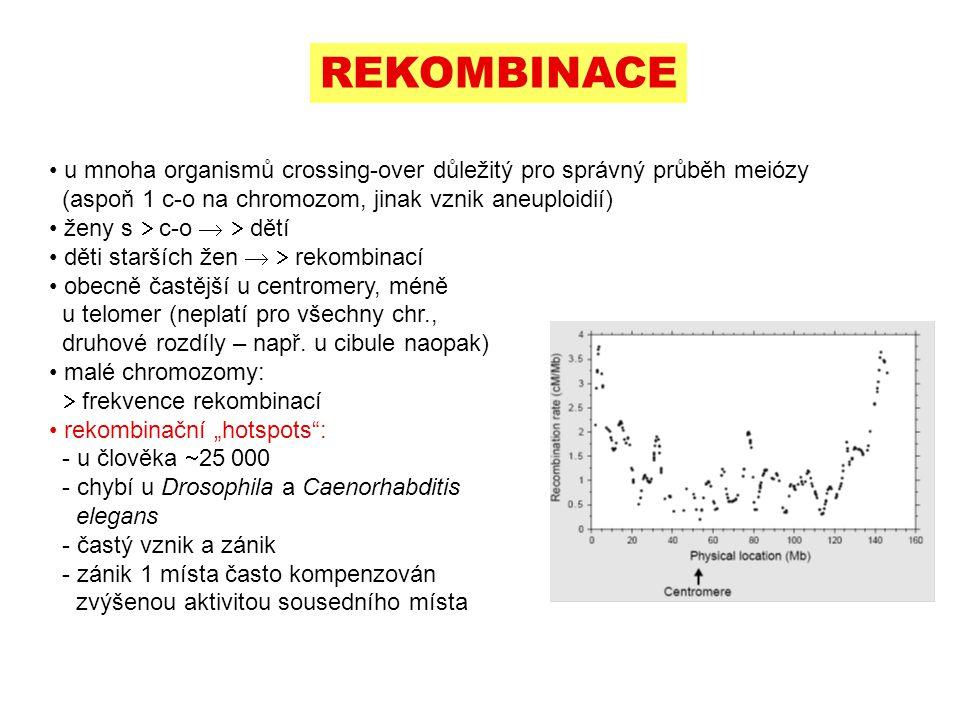REKOMBINACE u mnoha organismů crossing-over důležitý pro správný průběh meiózy (aspoň 1 c-o na chromozom, jinak vznik aneuploidií)