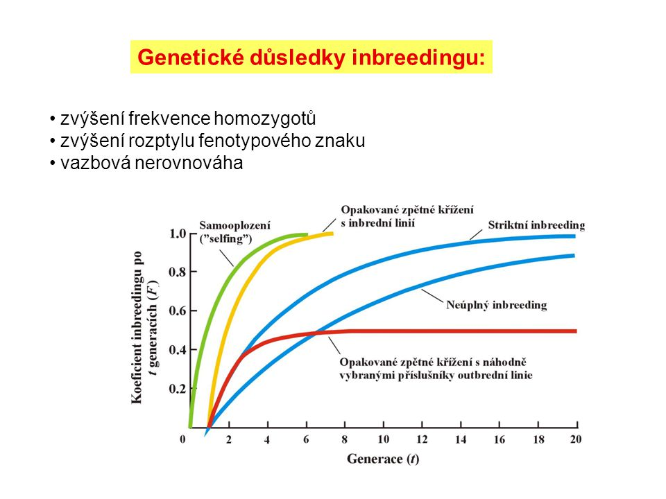 Genetické důsledky inbreedingu: