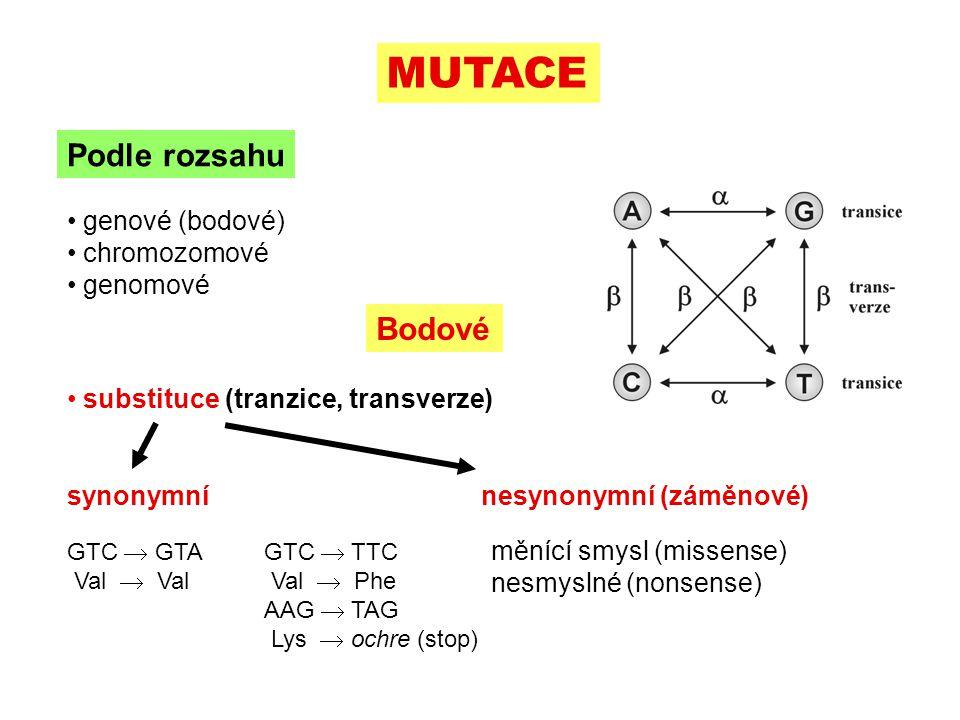MUTACE Podle rozsahu Bodové genové (bodové) chromozomové genomové