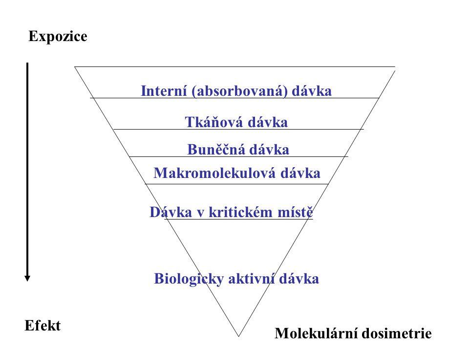 Interní (absorbovaná) dávka Biologicky aktivní dávka