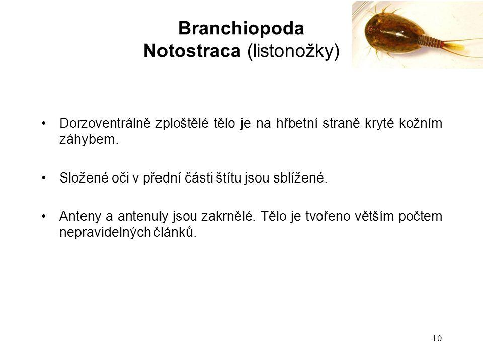 Notostraca (listonožky)