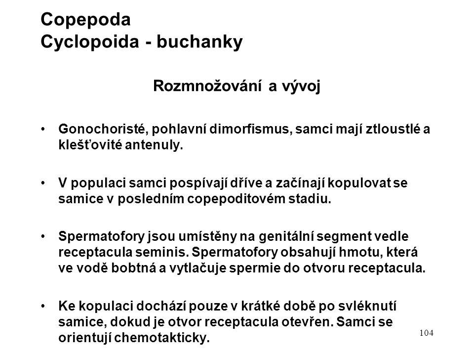 Copepoda Cyclopoida - buchanky