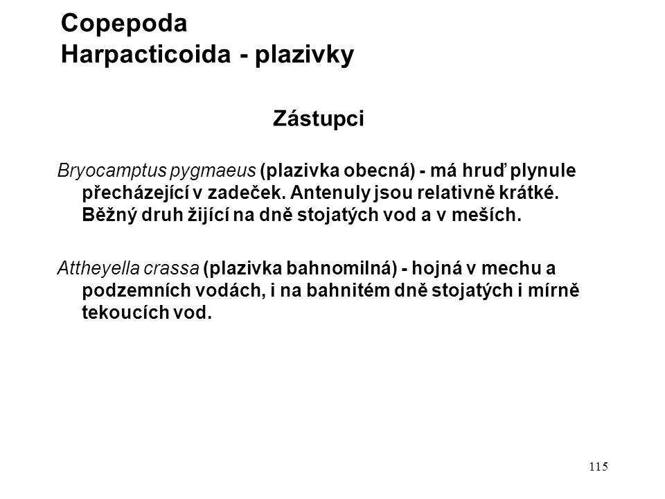 Copepoda Harpacticoida - plazivky