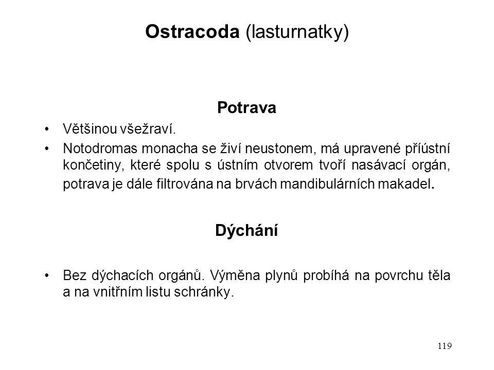 Ostracoda (lasturnatky)