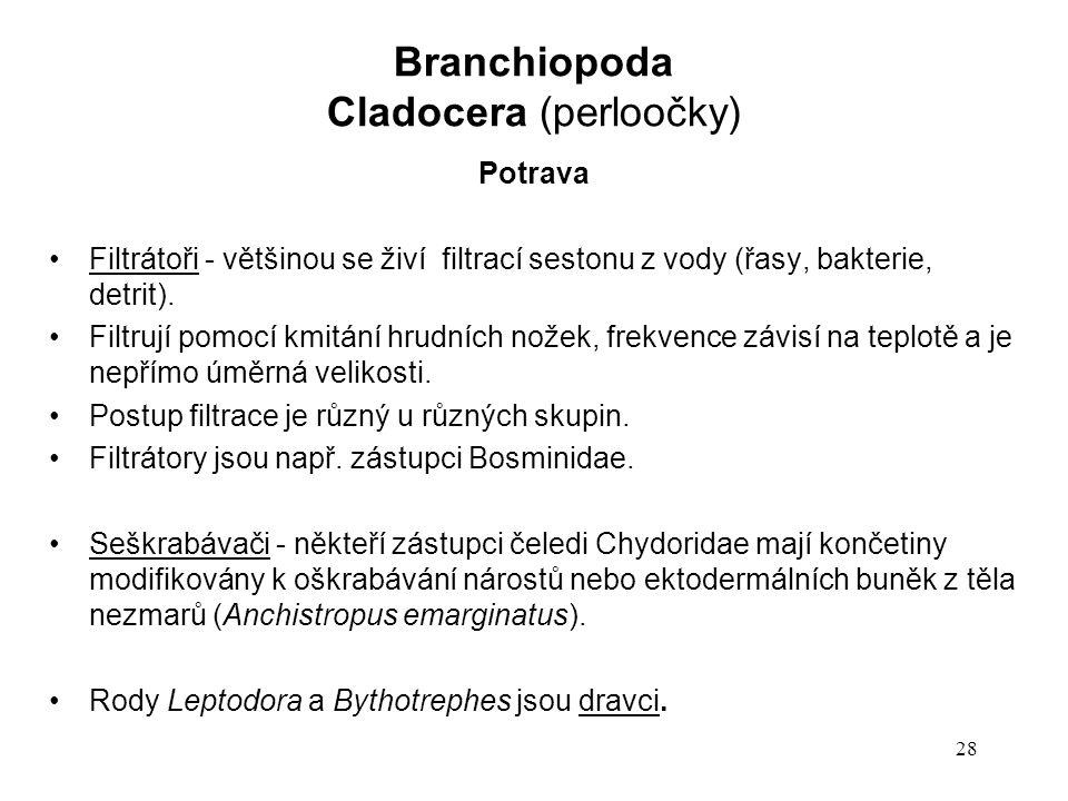 Cladocera (perloočky)