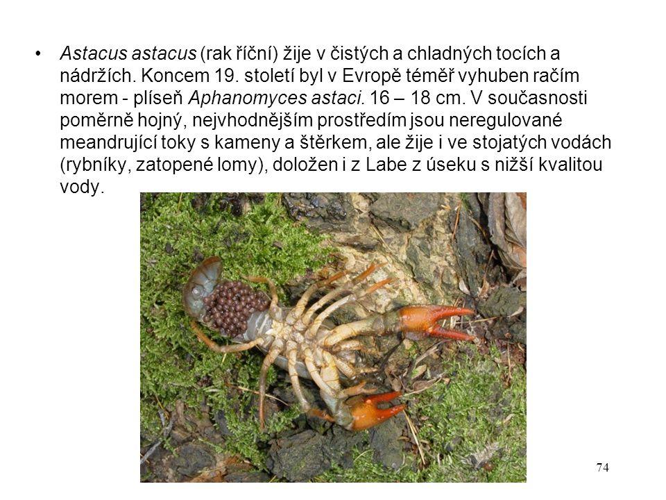 Astacus astacus (rak říční) žije v čistých a chladných tocích a nádržích.