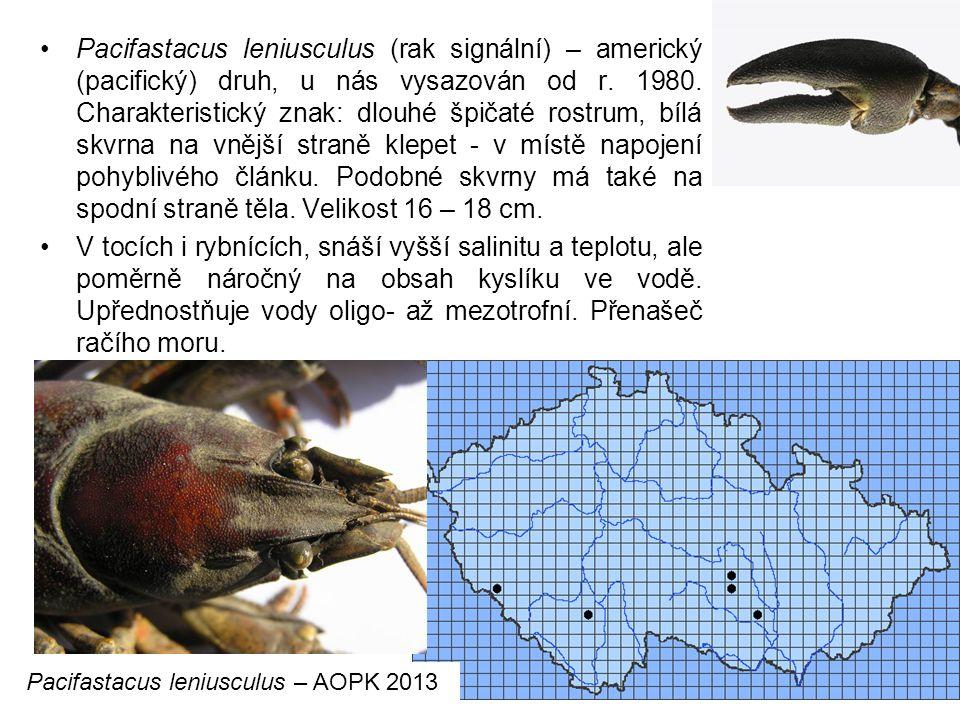 Pacifastacus leniusculus (rak signální) – americký (pacifický) druh, u nás vysazován od r. 1980. Charakteristický znak: dlouhé špičaté rostrum, bílá skvrna na vnější straně klepet - v místě napojení pohyblivého článku. Podobné skvrny má také na spodní straně těla. Velikost 16 – 18 cm.