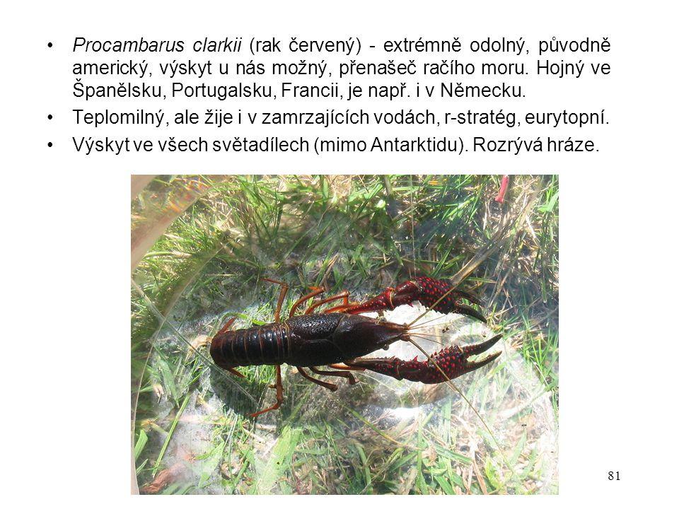 Procambarus clarkii (rak červený) - extrémně odolný, původně americký, výskyt u nás možný, přenašeč račího moru. Hojný ve Španělsku, Portugalsku, Francii, je např. i v Německu.