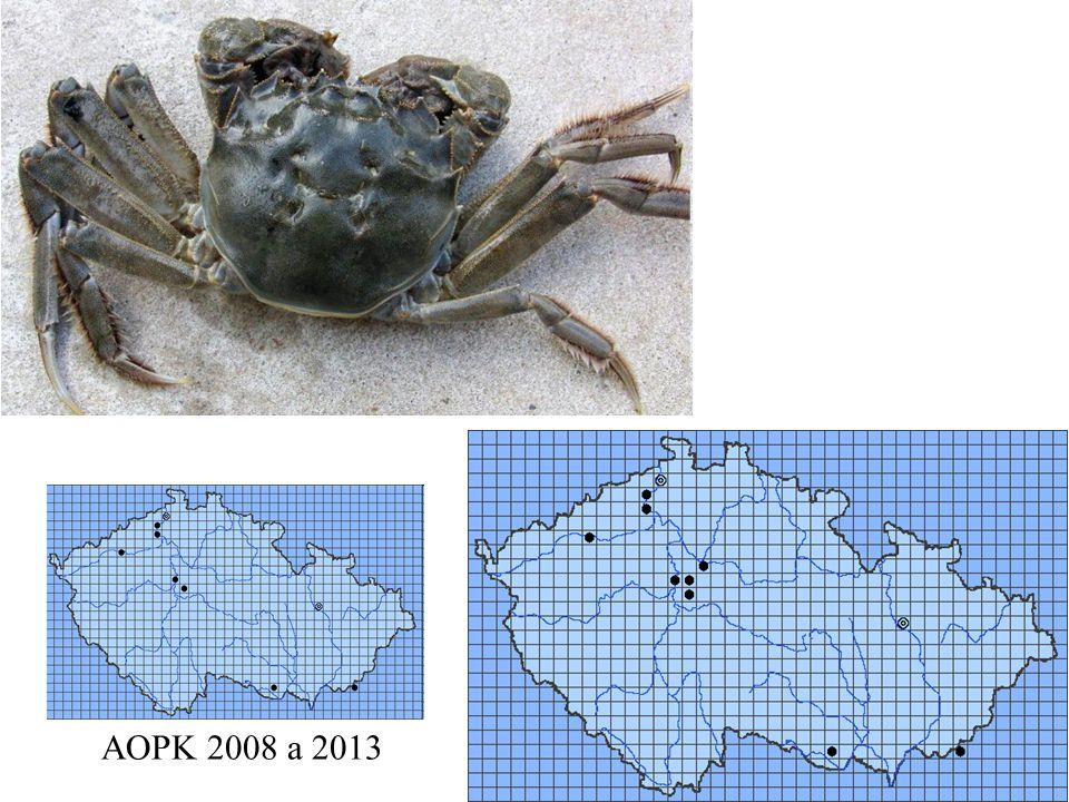 Eriocheir sinensis AOPK 2008 a 2013