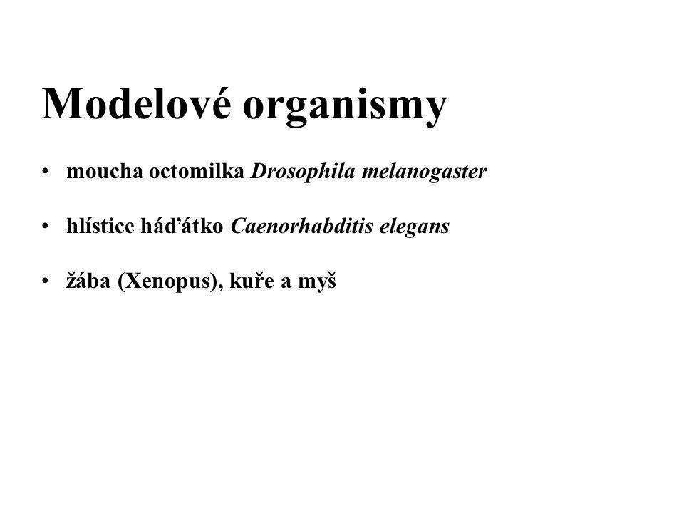 Modelové organismy moucha octomilka Drosophila melanogaster