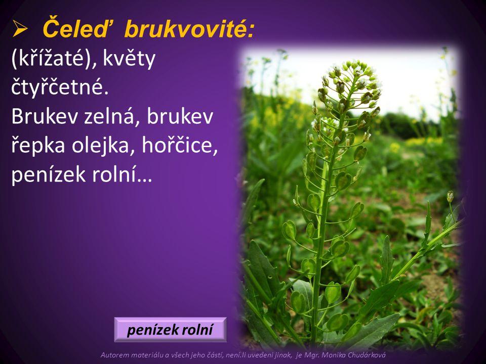 (křížaté), květy čtyřčetné.