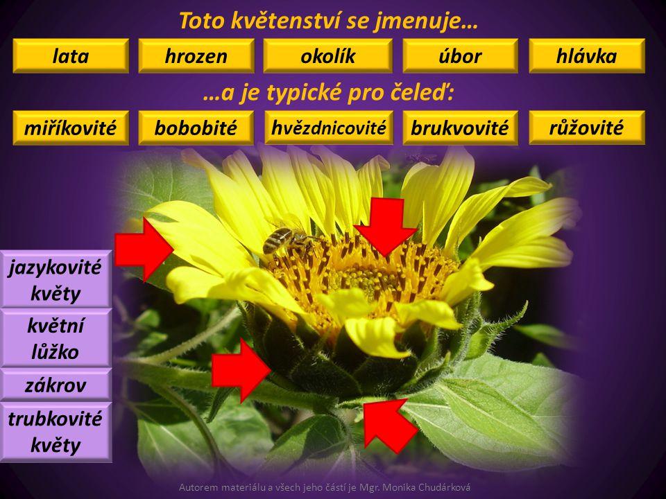 Toto květenství se jmenuje… …a je typické pro čeleď: