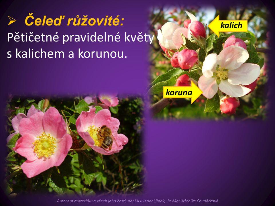Pětičetné pravidelné květy s kalichem a korunou.