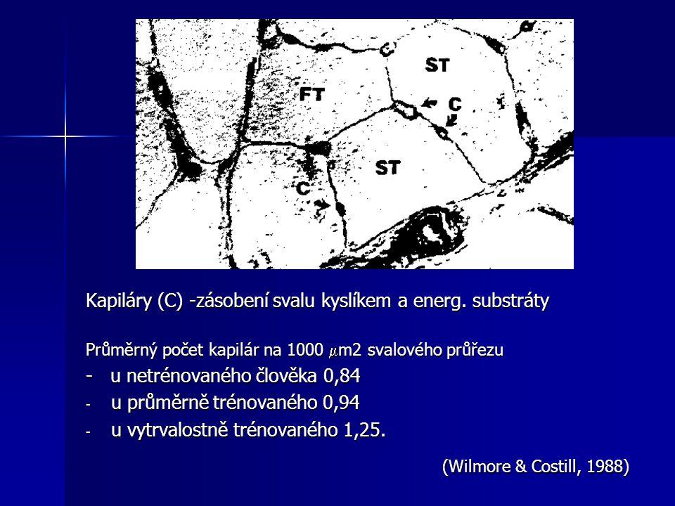Kapiláry (C) -zásobení svalu kyslíkem a energ. substráty