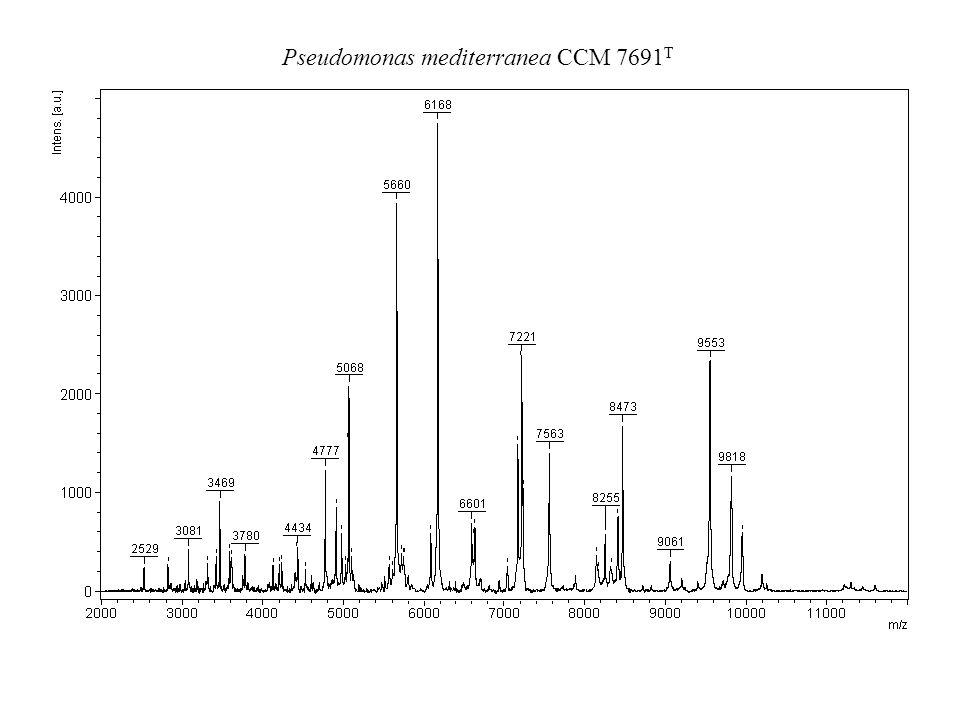 Pseudomonas mediterranea CCM 7691T