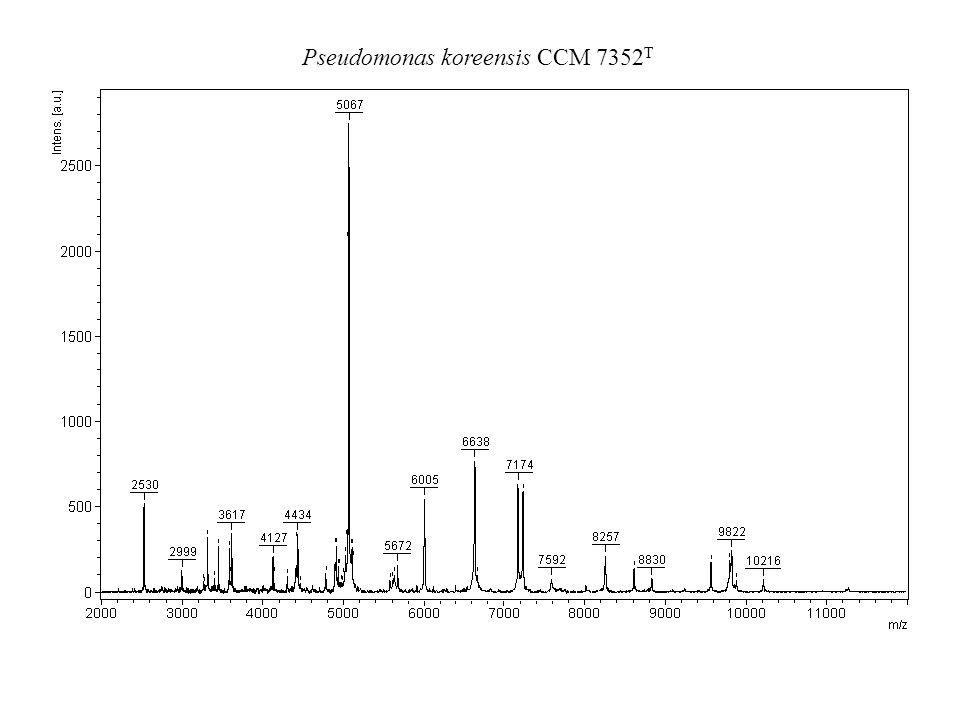 Pseudomonas koreensis CCM 7352T