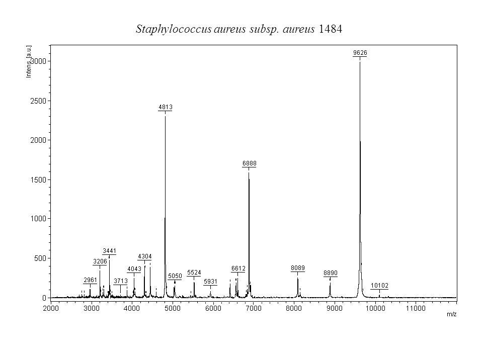 Staphylococcus aureus subsp. aureus 1484