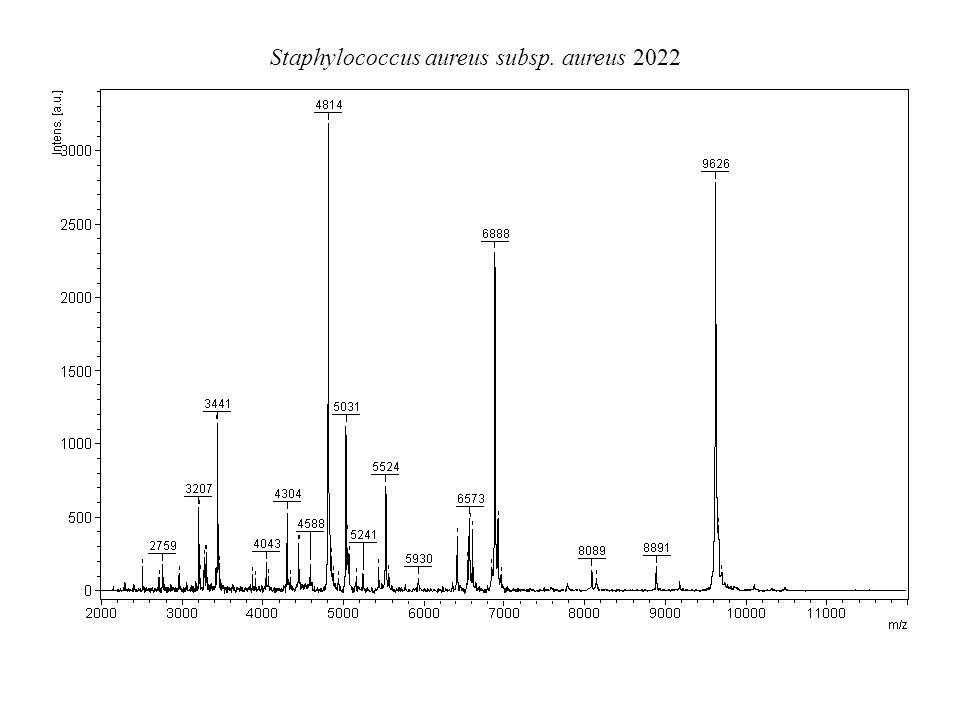 Staphylococcus aureus subsp. aureus 2022