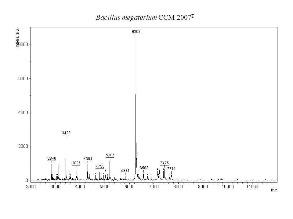 Bacillus megaterium CCM 2007T