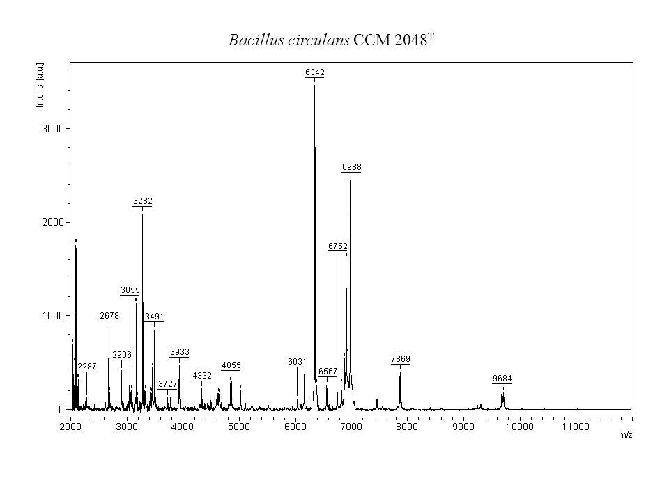 Bacillus circulans CCM 2048T