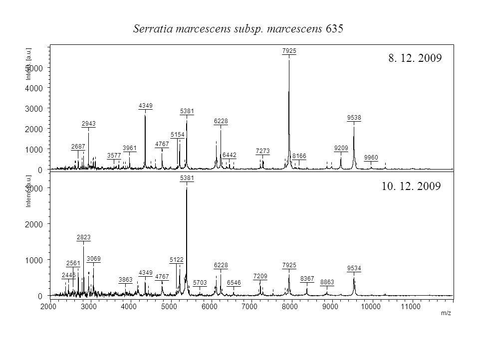 Serratia marcescens subsp. marcescens 635