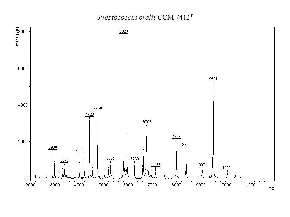 Streptococcus oralis CCM 7412T