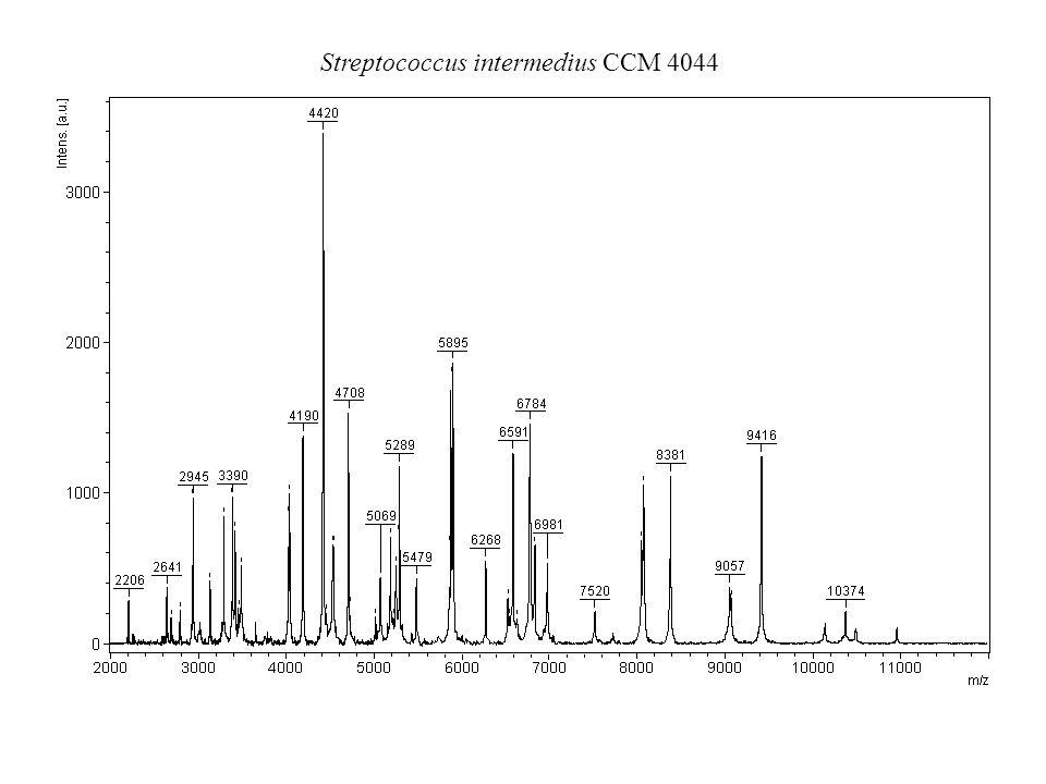 Streptococcus intermedius CCM 4044