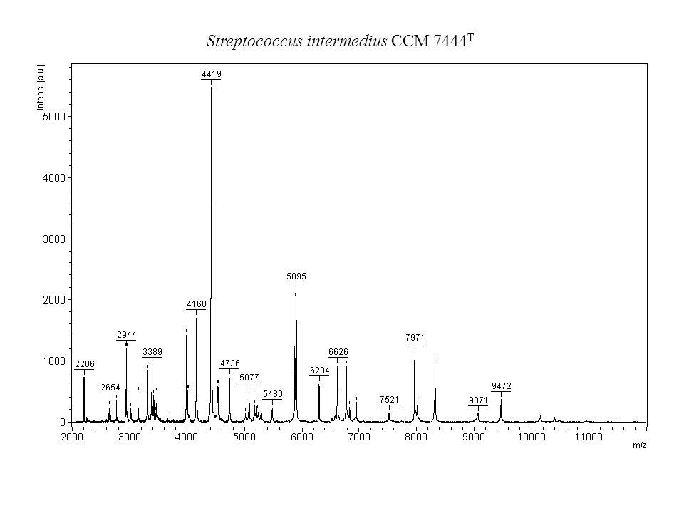Streptococcus intermedius CCM 7444T