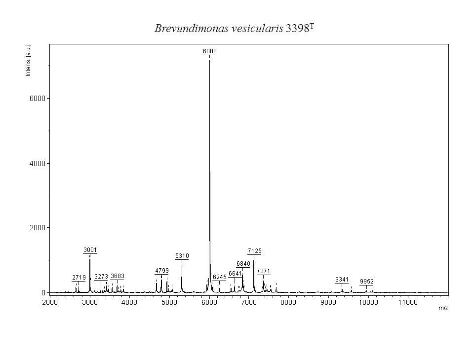 Brevundimonas vesicularis 3398T