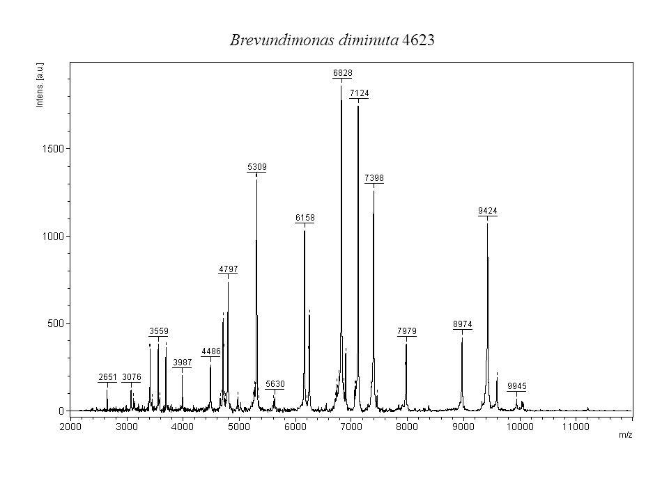 Brevundimonas diminuta 4623
