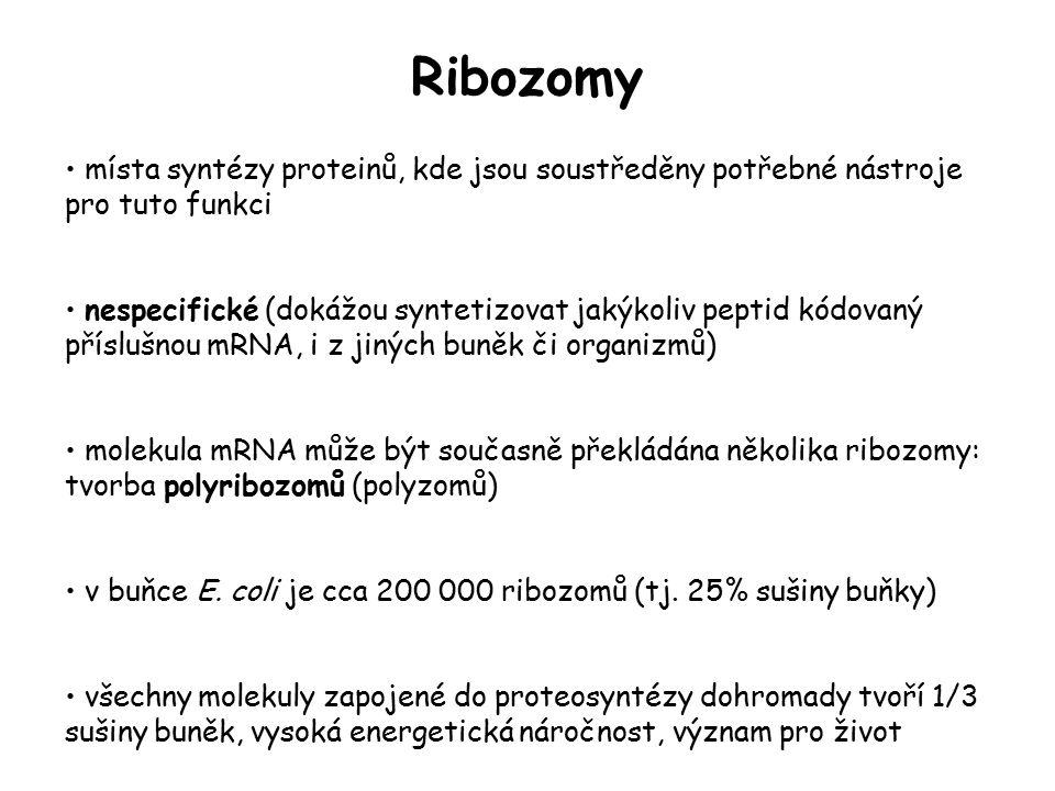 Ribozomy místa syntézy proteinů, kde jsou soustředěny potřebné nástroje pro tuto funkci.