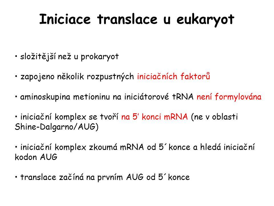 Iniciace translace u eukaryot