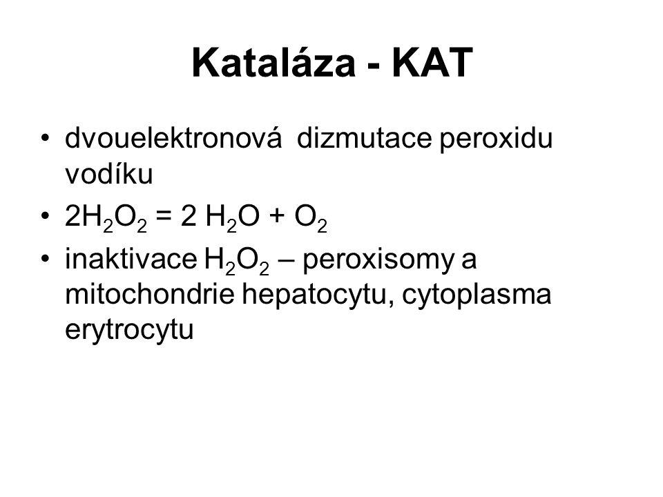 Kataláza - KAT dvouelektronová dizmutace peroxidu vodíku