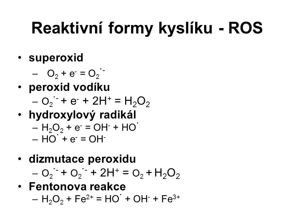 Reaktivní formy kyslíku - ROS