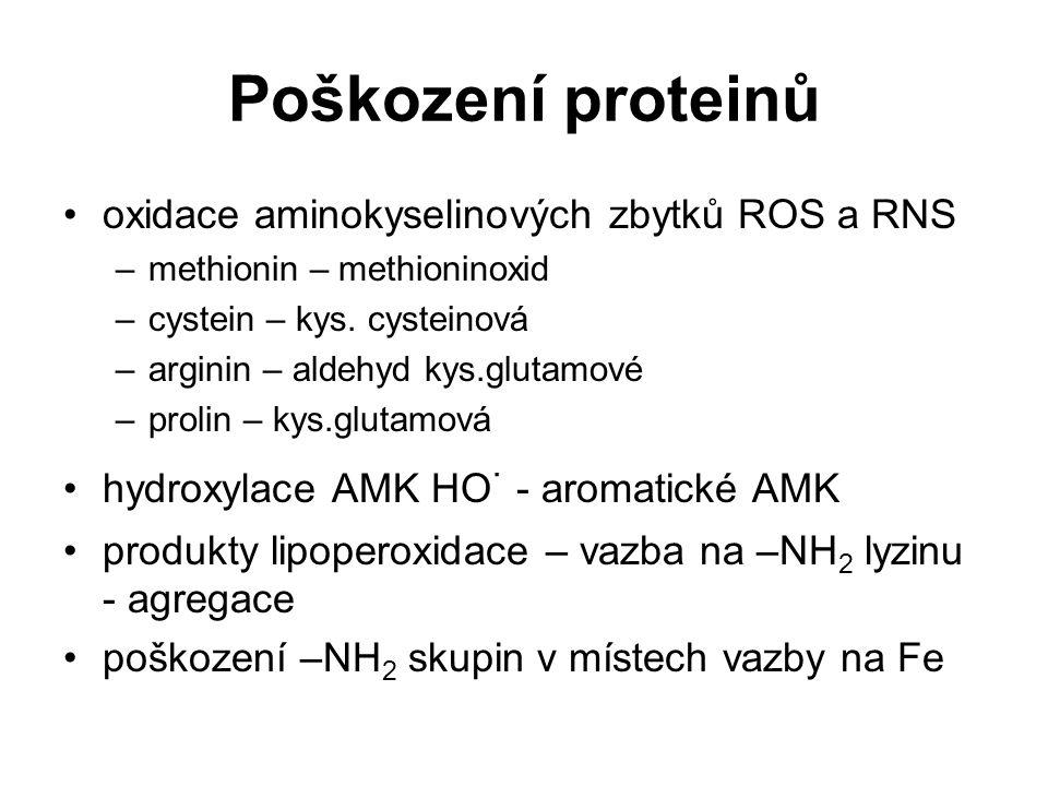 Poškození proteinů oxidace aminokyselinových zbytků ROS a RNS