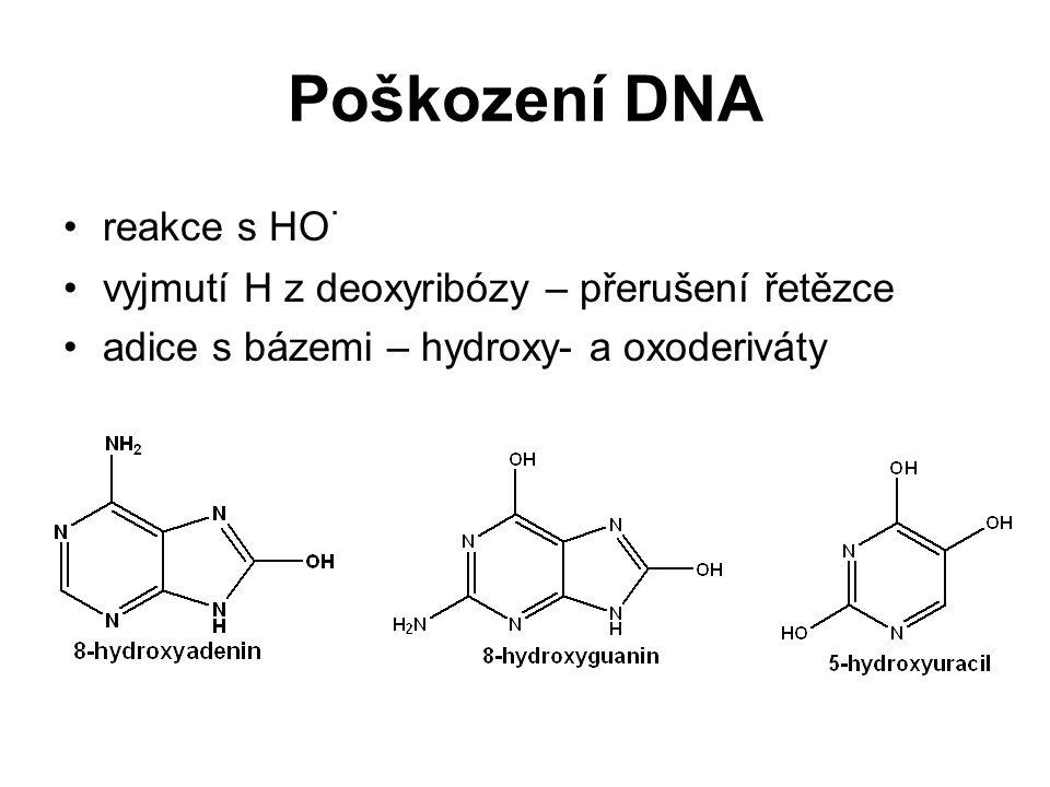 Poškození DNA reakce s HO· vyjmutí H z deoxyribózy – přerušení řetězce