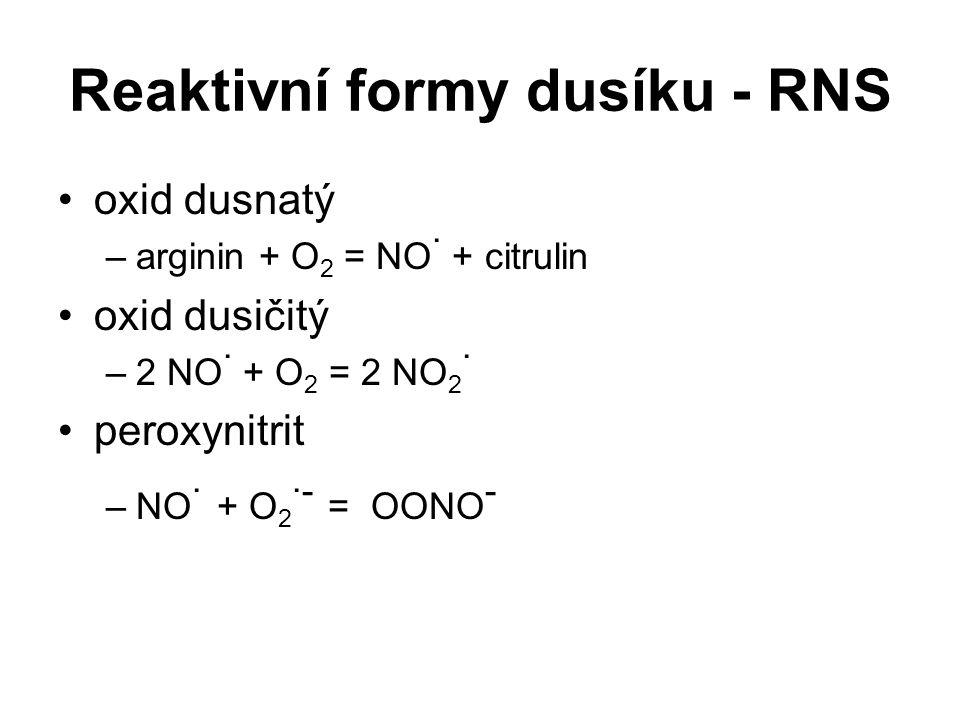 Reaktivní formy dusíku - RNS