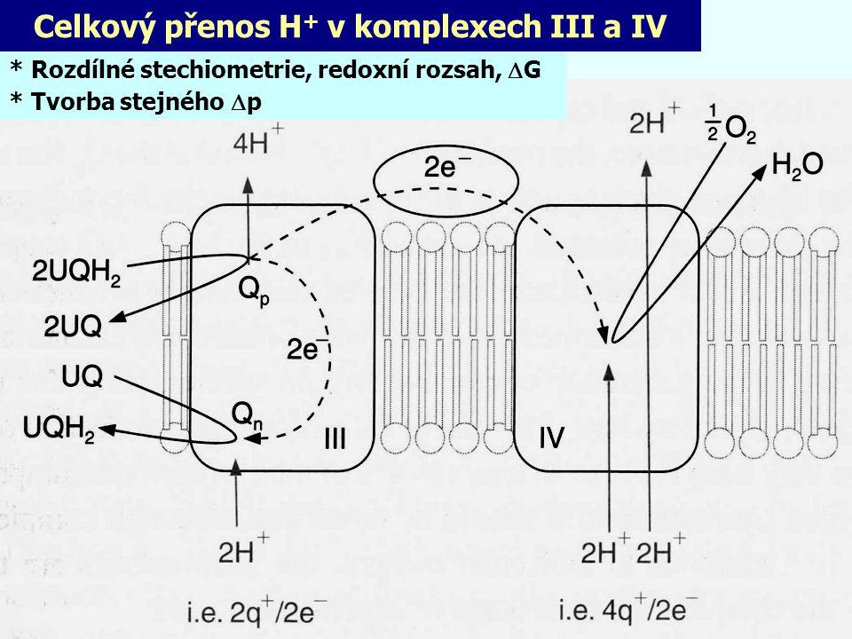 Celkový přenos H+ v komplexech III a IV