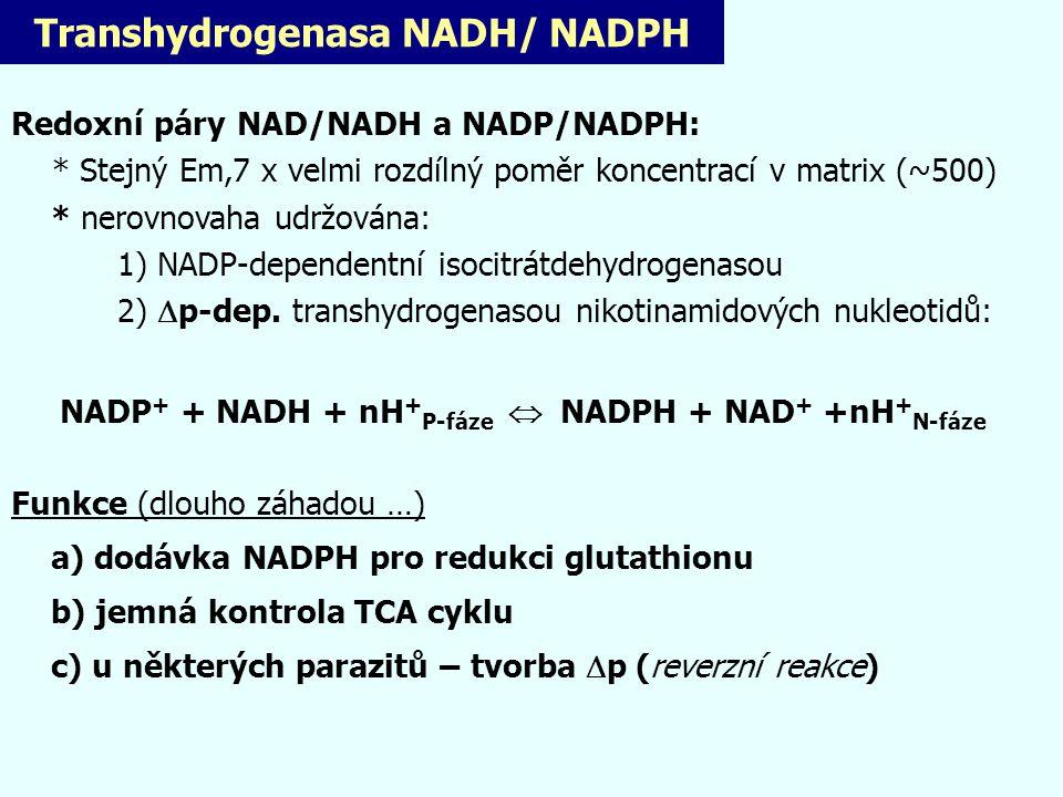 Transhydrogenasa NADH/ NADPH