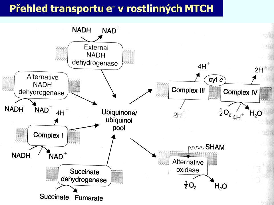 Přehled transportu e- v rostlinných MTCH