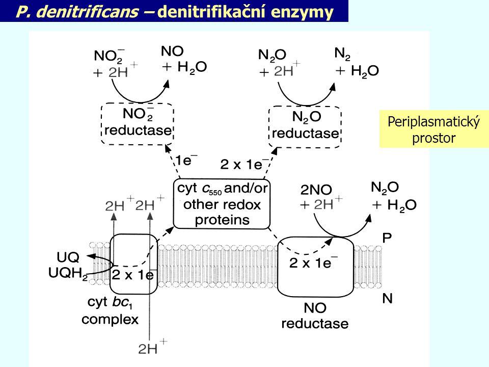 P. denitrificans – denitrifikační enzymy