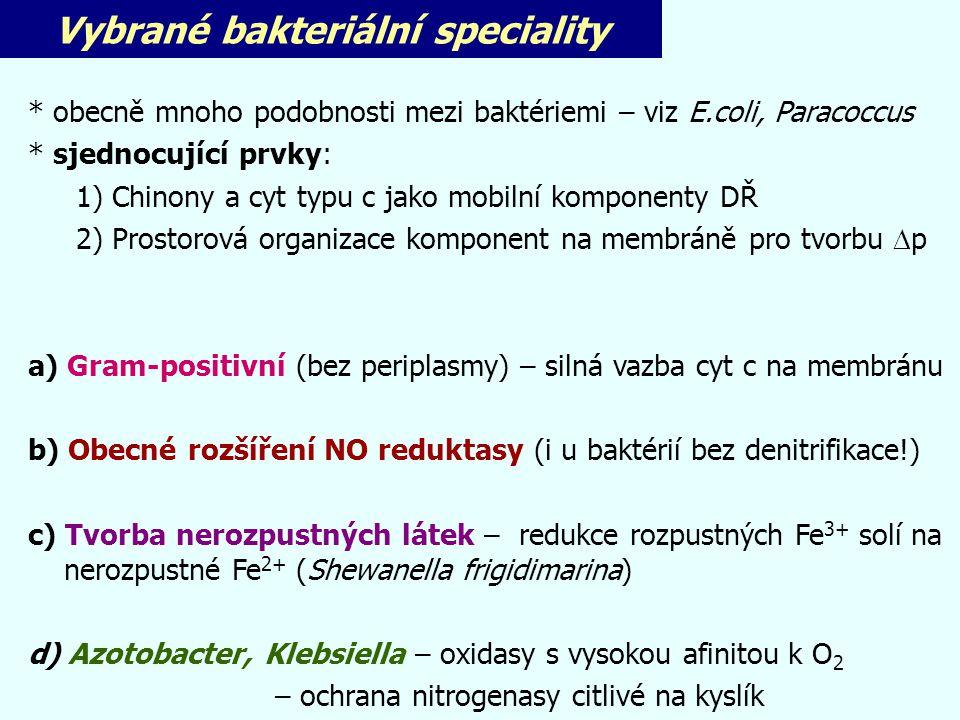 Vybrané bakteriální speciality
