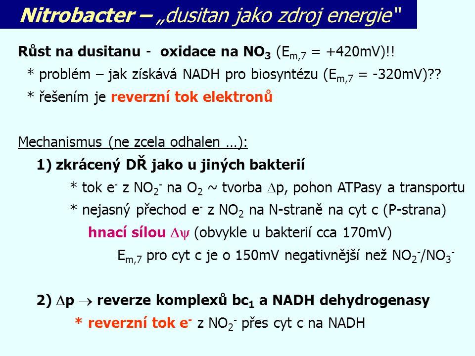 "Nitrobacter – ""dusitan jako zdroj energie"