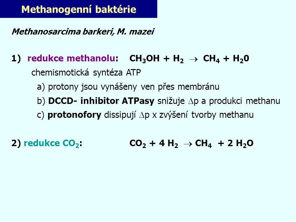 Methanogenní baktérie