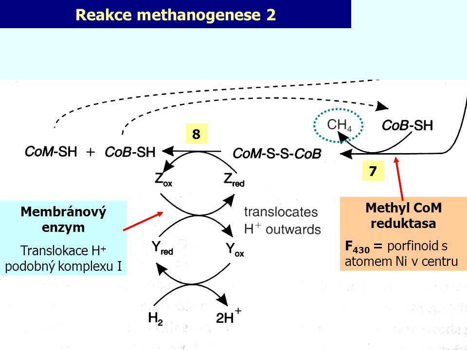 Translokace H+ podobný komplexu I