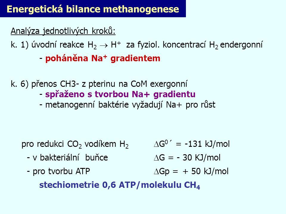 Energetická bilance methanogenese