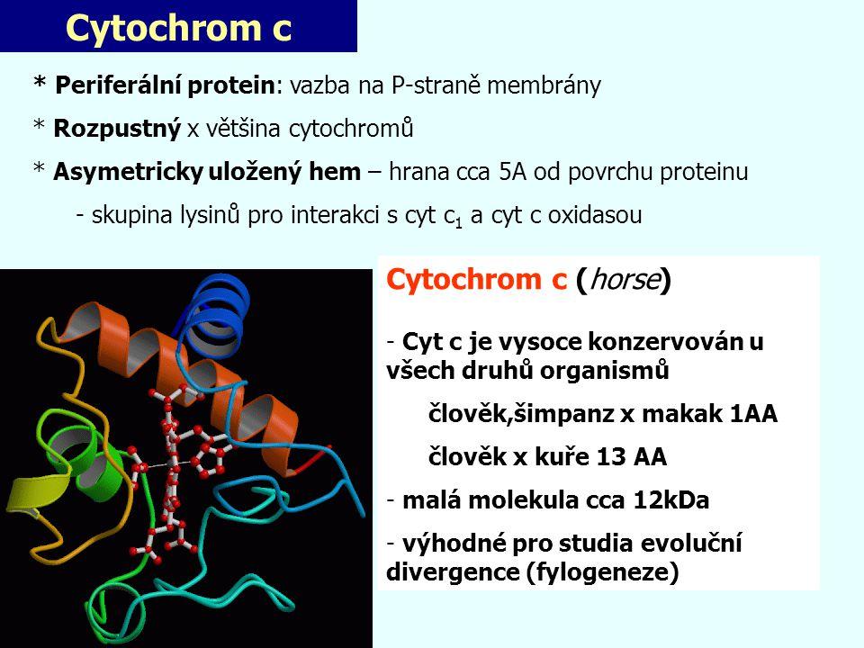 Cytochrom c Cytochrom c (horse)