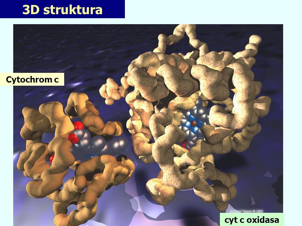 3D struktura Cytochrom c cyt c oxidasa
