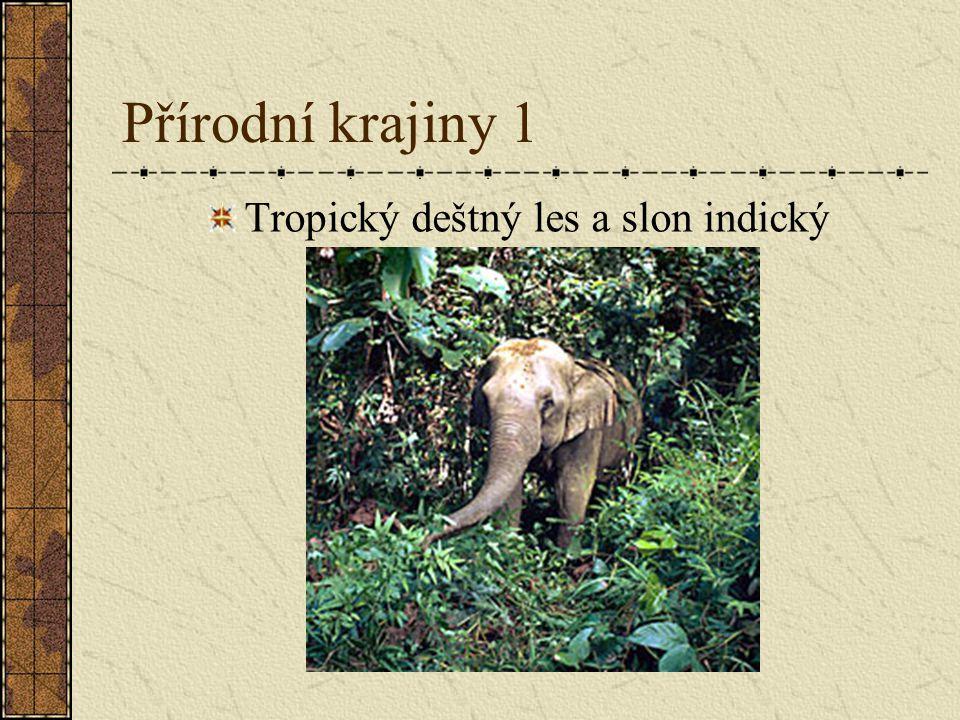 Tropický deštný les a slon indický