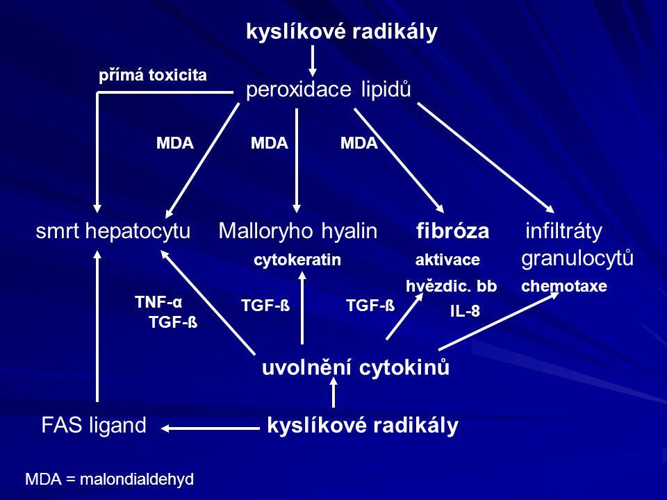 smrt hepatocytu Malloryho hyalin fibróza infiltráty